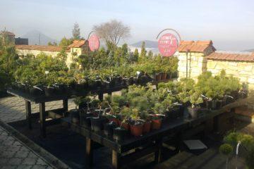 Naše zahradnictví
