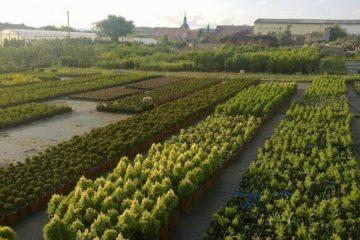 Rostlinná výroba